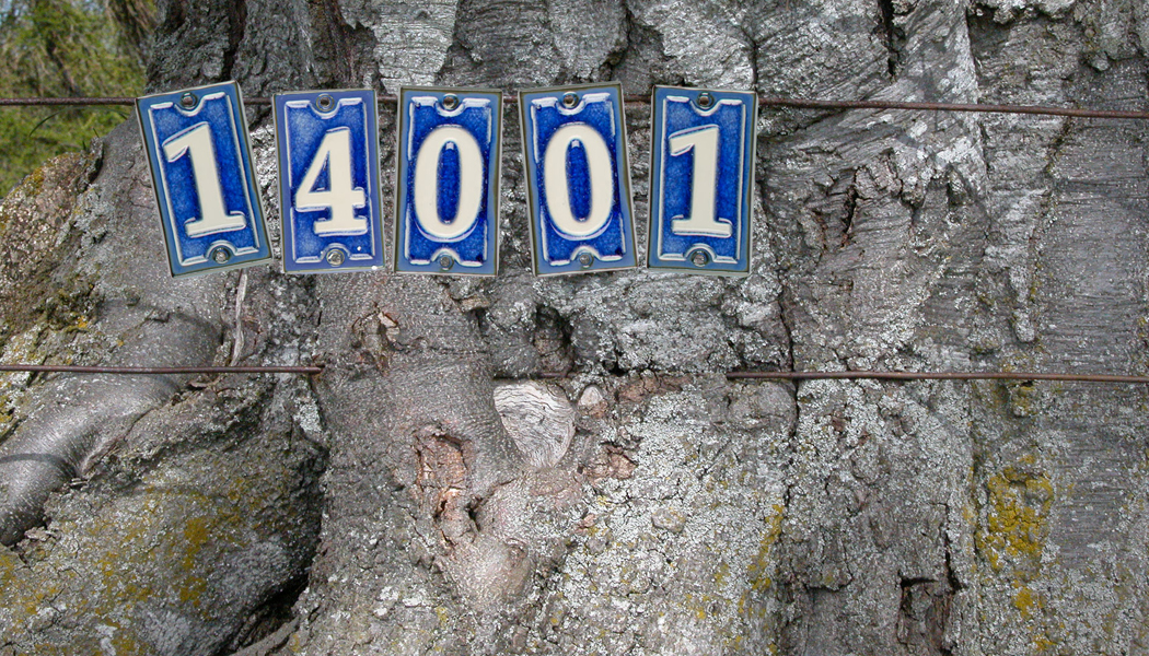 ISO 14001 sign on treetrunk