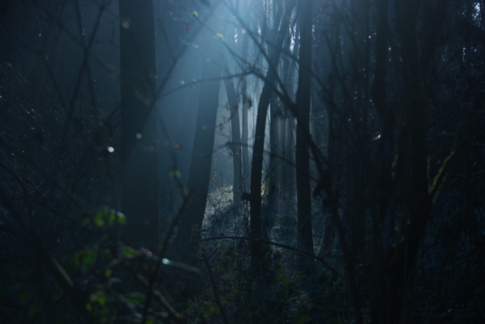 Backlit dark forest.